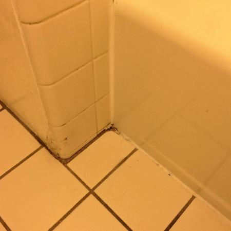 Blue Jay Lodge: Dirty floors