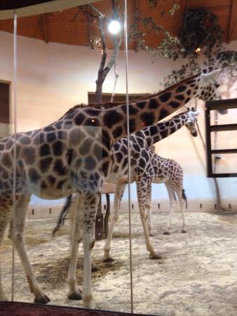 Prager Zoo: photo0.jpg