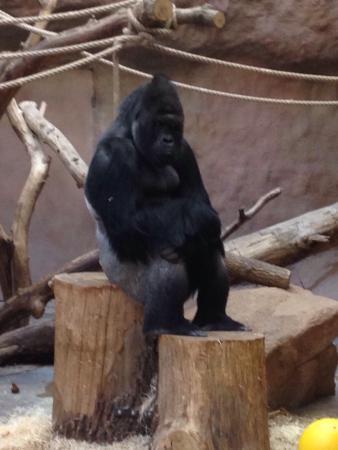 Prager Zoo: photo1.jpg