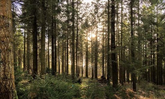 Haldon Forest Park (Forestry England)