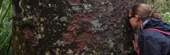 Waipoua Forest, Nueva Zelanda: Hongi avec un Kauri