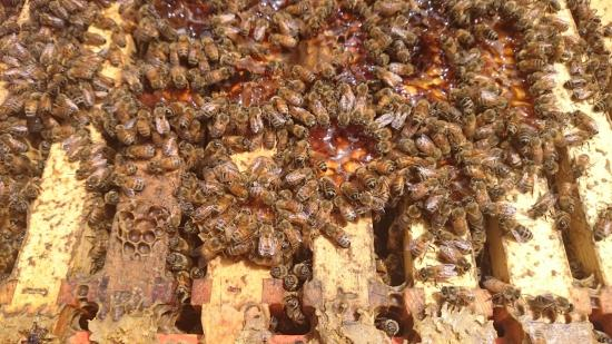 Bee Haven Paihia: Infatigables travailleuses