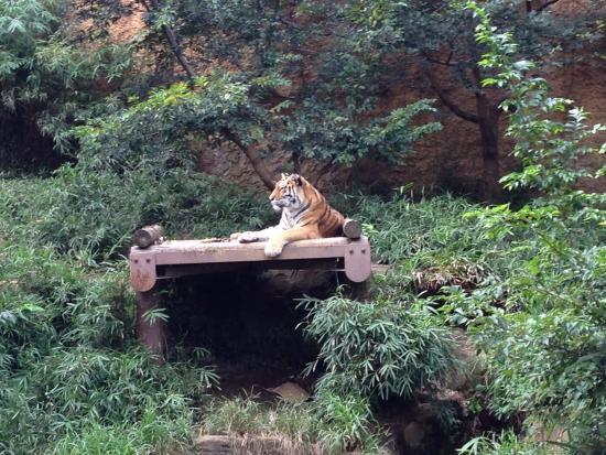 雪豹 - Picture of Tama Zoological Park, Hino - TripAdvisor