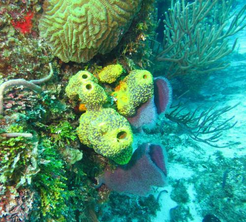 Yucab Reef : coral/sponges