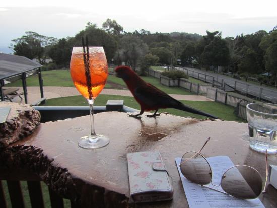 Canungra, Australia: Cocktail :-)