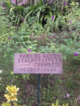 Falls Resort at Manuel Antonio: plants in the yard