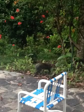 Falls Resort at Manuel Antonio: terrace in the yard