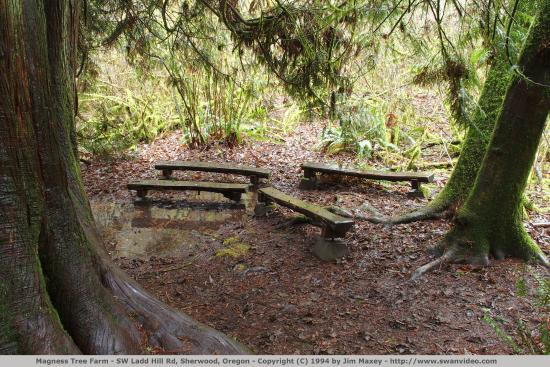 Sherwood, OR: Magness Memorial Tree Farm picnic tables