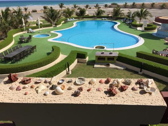 Masirah Island, Omán: My shell collection