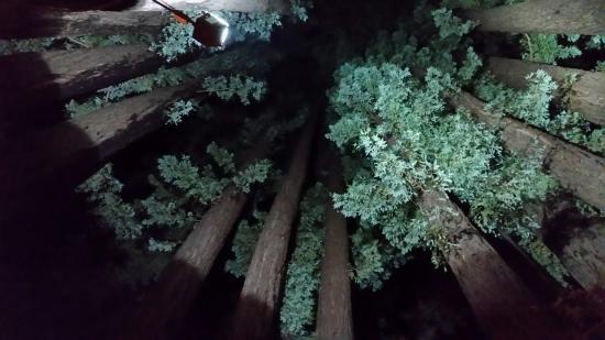 Casa Nostra: Redwood pod