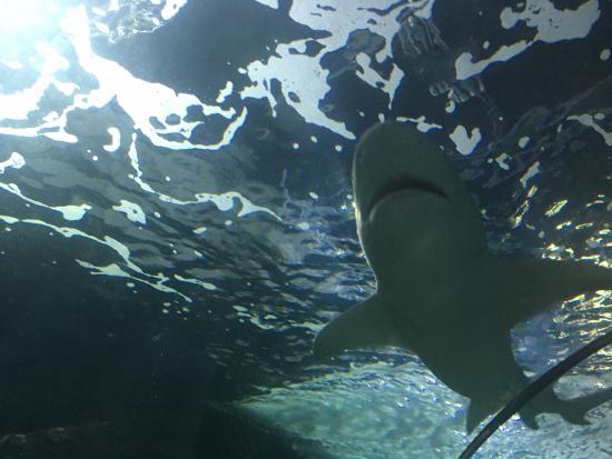 Sea Life Sydney Aquarium : photo5.jpg