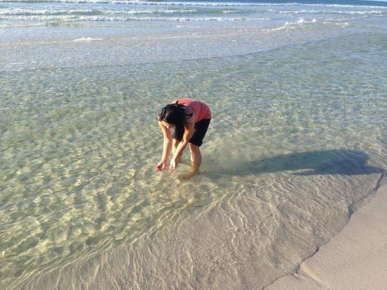 Wyndham Garden Fort Walton Beach Destin : Clearwater