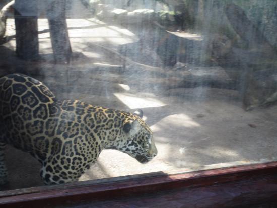 Bel Air Collection Xpu Ha Riviera Maya: Jaguar