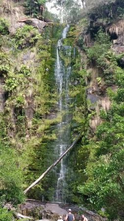 Erskine Falls: 20160111_104256_large.jpg