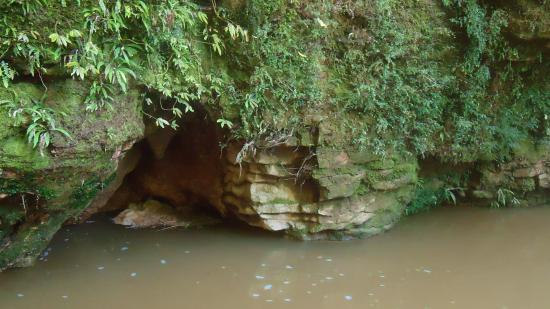 Waitomo Glowworm Caves: rocks