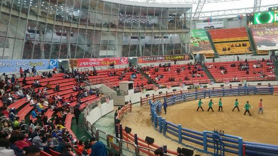Cheongdo Bullfighting Stadium