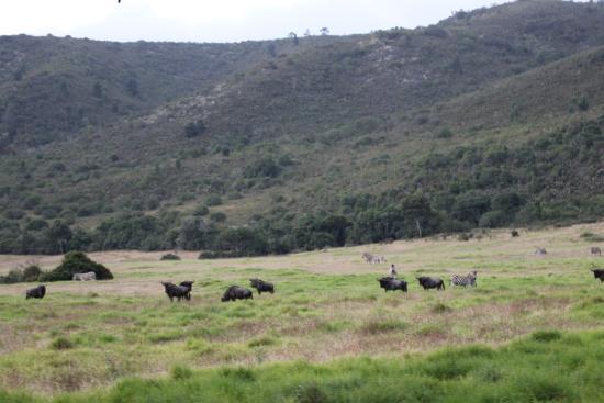 Giraffe View Safari Camp: Plain