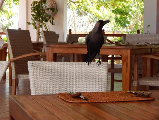 Bluebay Beach Resort and Spa: Connoisseur