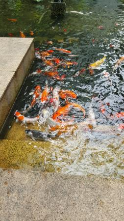 Shangri-La Hotel Kuala Lumpur: Outdoor facilities with golden fishes