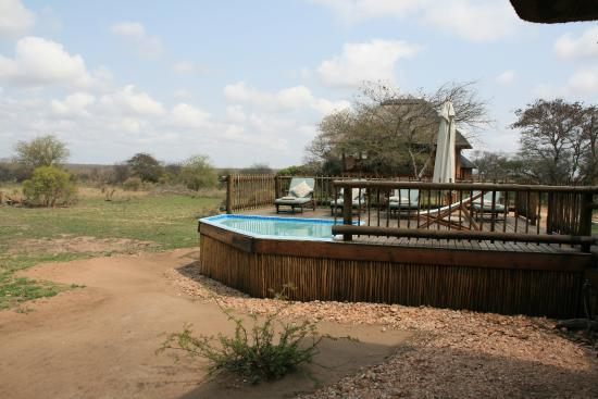 nThambo Tree Camp: Piscine