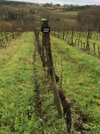 Saussignac, Francia: Walking through the vineyard