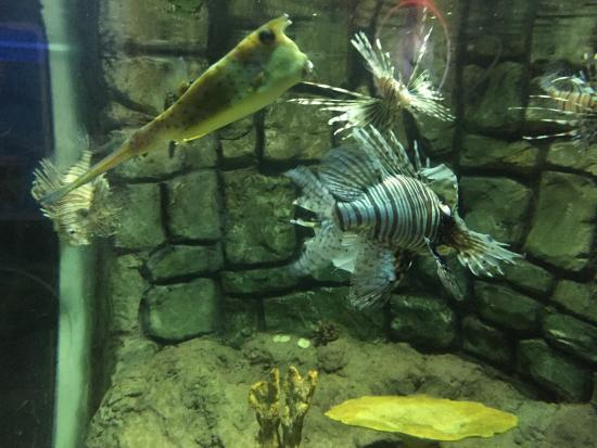 Sea life in Bray! - Picture of National Sea Life Centre, Bray ...