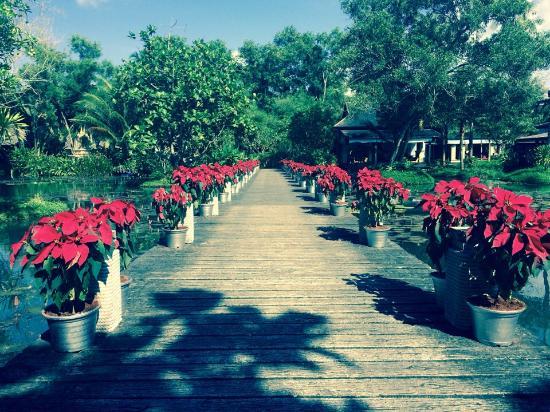 Anantara Mai Khao Phuket Villas: Природа