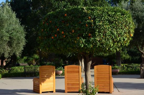 Jardin el Harti: Orange tree in the Parc El Harti