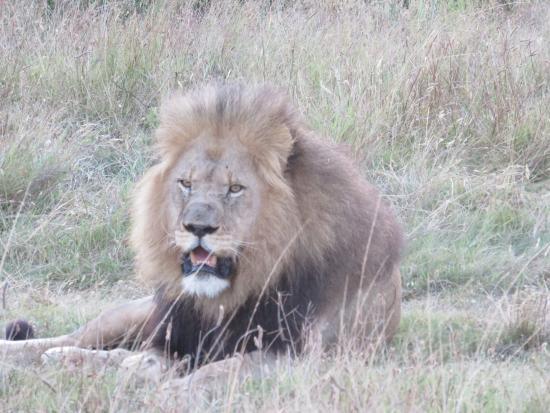 "Kenton-on-Sea, Sudáfrica: ""who you looking at?"""