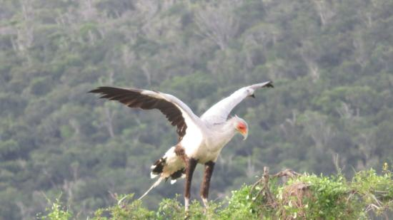 Кентон-он-Си, Южная Африка: An African Fish Eagle off to lunch
