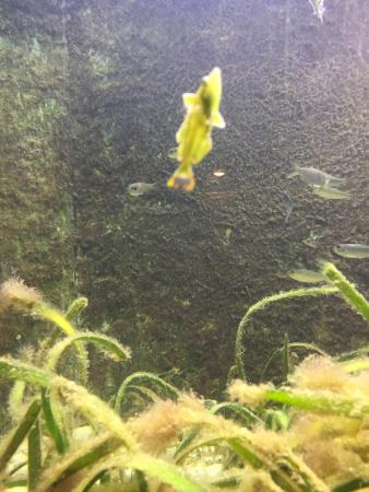 St. Lucie County Aquarium - Smithsonian Marine Ecosystems Exhibit: photo2.jpg