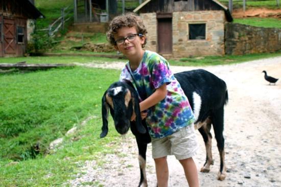 Lake Toxaway, Carolina do Norte: Goats are fun