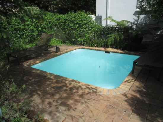 Akademie Street Boutique Hotel and Guest House: Plunge pool outside Vreugde