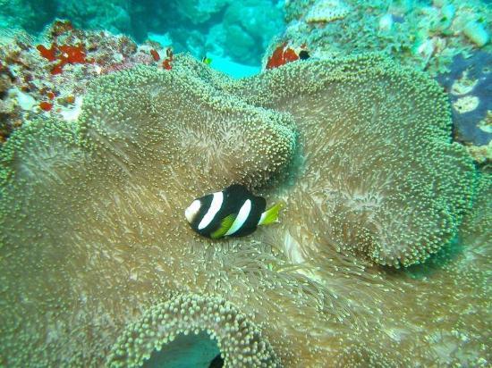 Vilamendhoo Island Resort & Spa: Diving the House Reef
