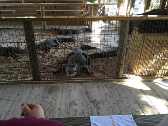 Gator Park: photo0.jpg