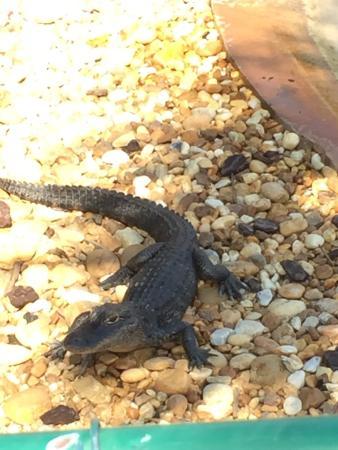 Gator Park: photo2.jpg