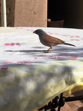 Riad Dubai: Bird eating bread crums