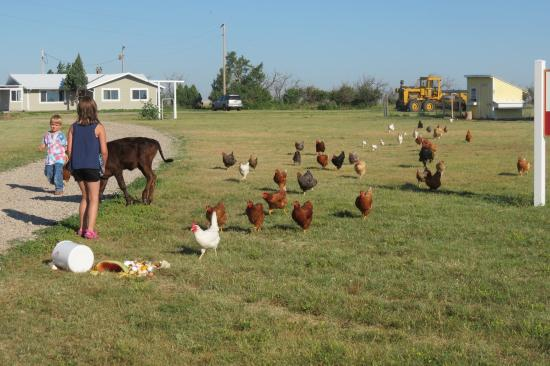Circle View Guest Ranch: Lots of farm animals