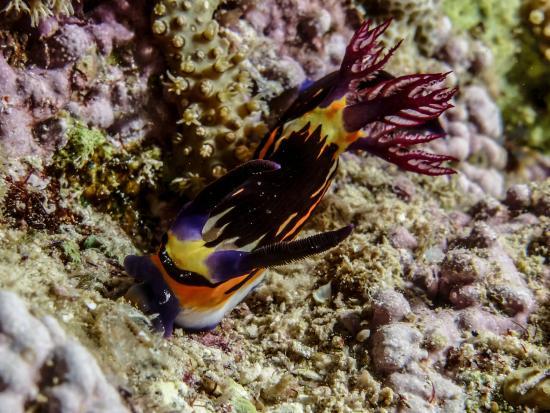 Scuba Hurghada Diving Center: Hurghada diving