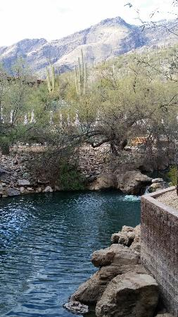 Loews Ventana Canyon Resort: 20160110_152739_large.jpg