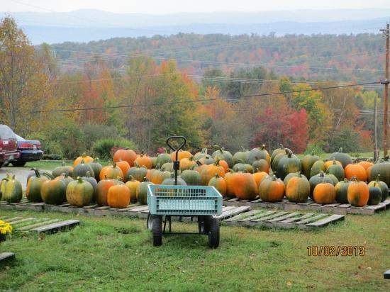 Haverhill, NH: Fall Pumpkins at Windy Ridge Orchard