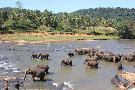 Pinnawala Elephant Orphanage - 2019 All You Need to Know