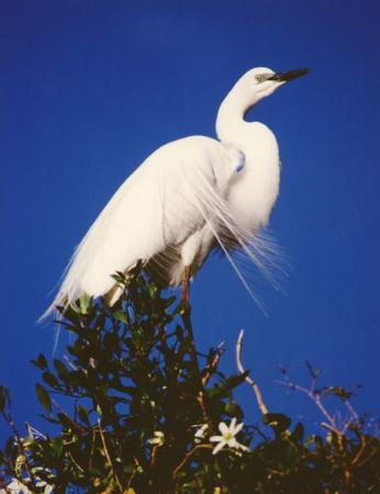 White Heron Sanctuary Tours