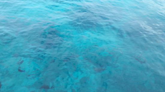 จอร์จทาวน์, เกาะแกรนด์เคย์แมน: beautiful water...see the fishies?