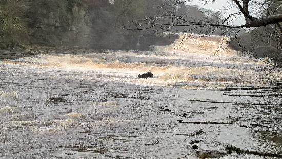Redmire, UK: Aysgarth falls