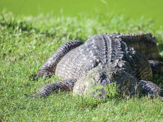 Shreveport, LA: Gators and Friends Alligator Park and Exotic Zoo