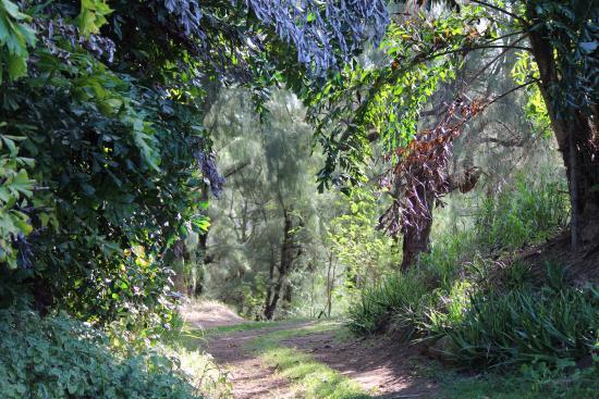 Kapaau, Hawaï : Walking Trail