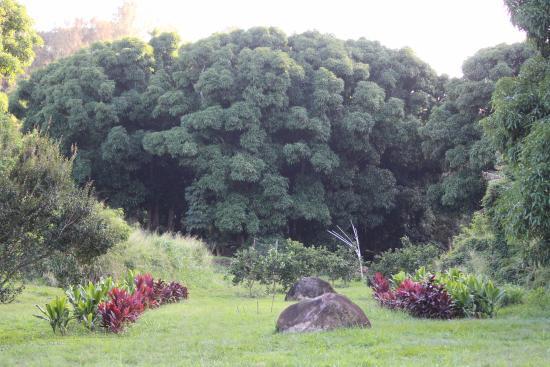 Kapaau, Hawaï : In the Valley