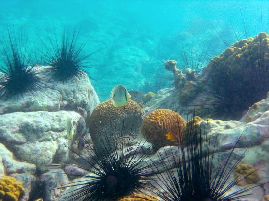 Water Island, St. Thomas: Snorkeling off Honeymoon Beach