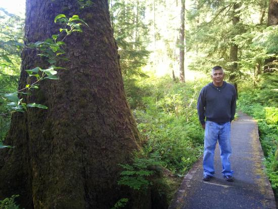 Hoquiam, Etat de Washington : Hillside Trail behind the museum filled with second growth trees
